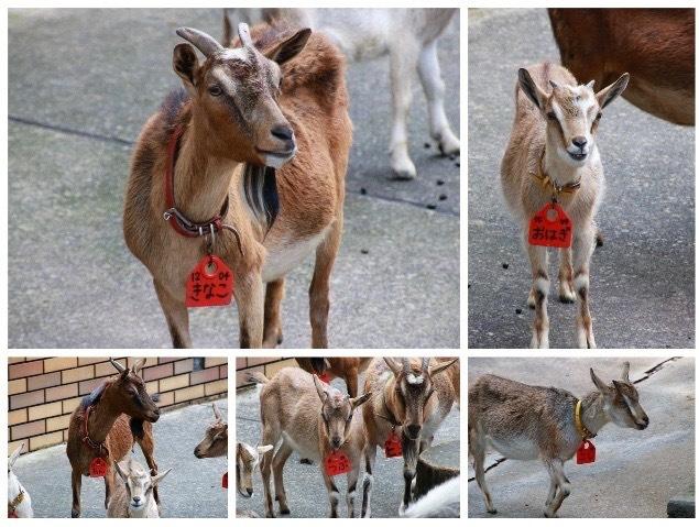 【多摩動物公園】part 3_f0348831_08233565.jpg
