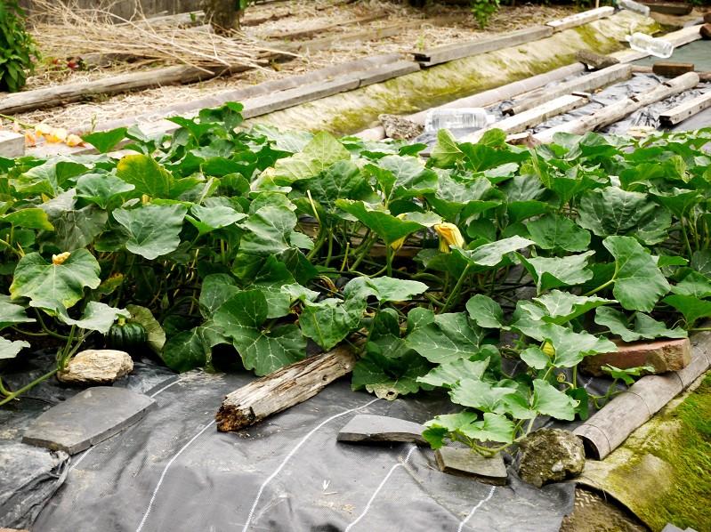農作物_b0093754_19565074.jpg