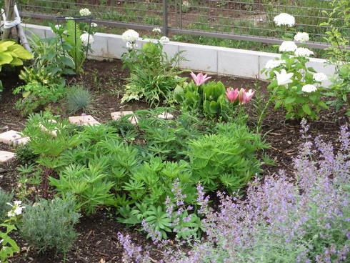 静寂の中の庭_a0243064_740187.jpg