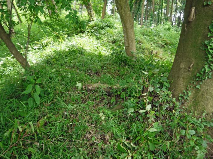 六国見山で下草刈りの最中にサンショウの木発見6・26_c0014967_852151.jpg