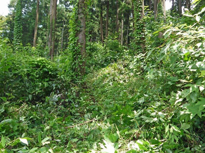 六国見山で下草刈りの最中にサンショウの木発見6・26_c0014967_8532176.jpg