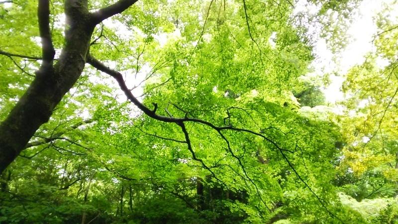 ぶらり箱根旅♪_f0351775_14325174.jpg