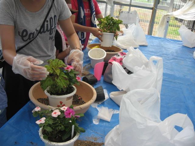 夏休み寄せ植え教室 参加者募集_d0338682_09232515.jpg