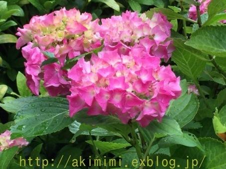 b0245488_01020862.jpg