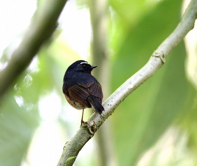 台湾鳥見旅行(その5)・・・_c0213607_19483868.jpg