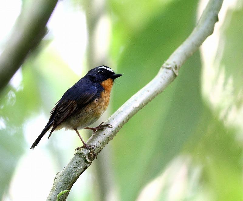 台湾鳥見旅行(その5)・・・_c0213607_19484231.jpg