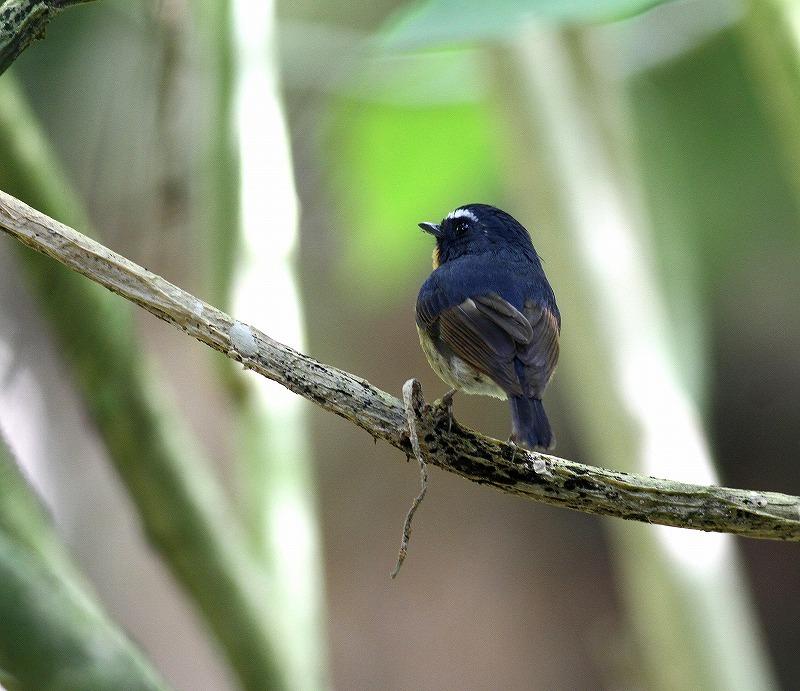 台湾鳥見旅行(その5)・・・_c0213607_19484940.jpg
