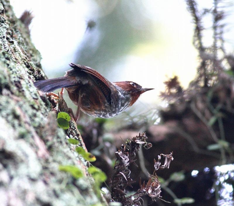 台湾鳥見旅行(その5)・・・_c0213607_19512056.jpg