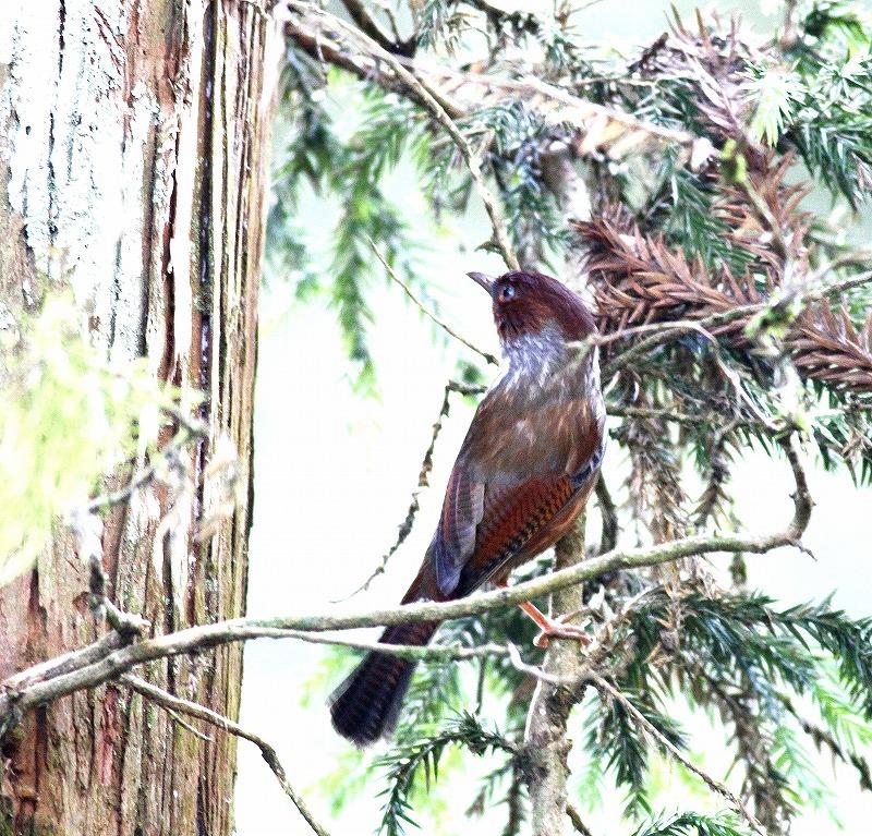 台湾鳥見旅行(その5)・・・_c0213607_19512470.jpg