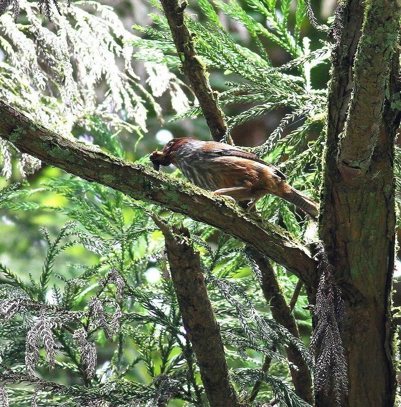 台湾鳥見旅行(その5)・・・_c0213607_19513242.jpg