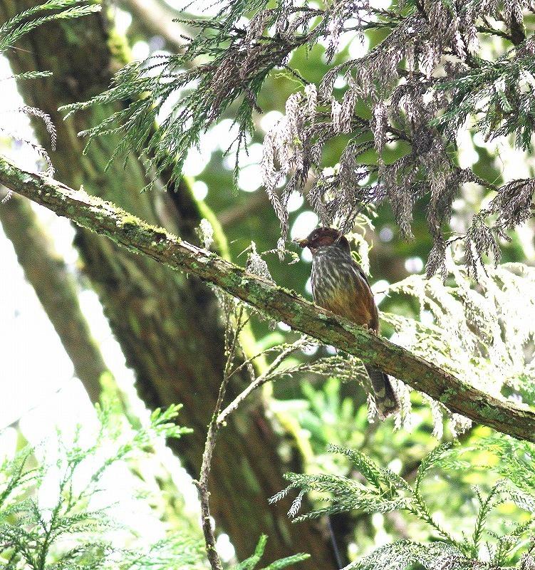 台湾鳥見旅行(その5)・・・_c0213607_19513722.jpg
