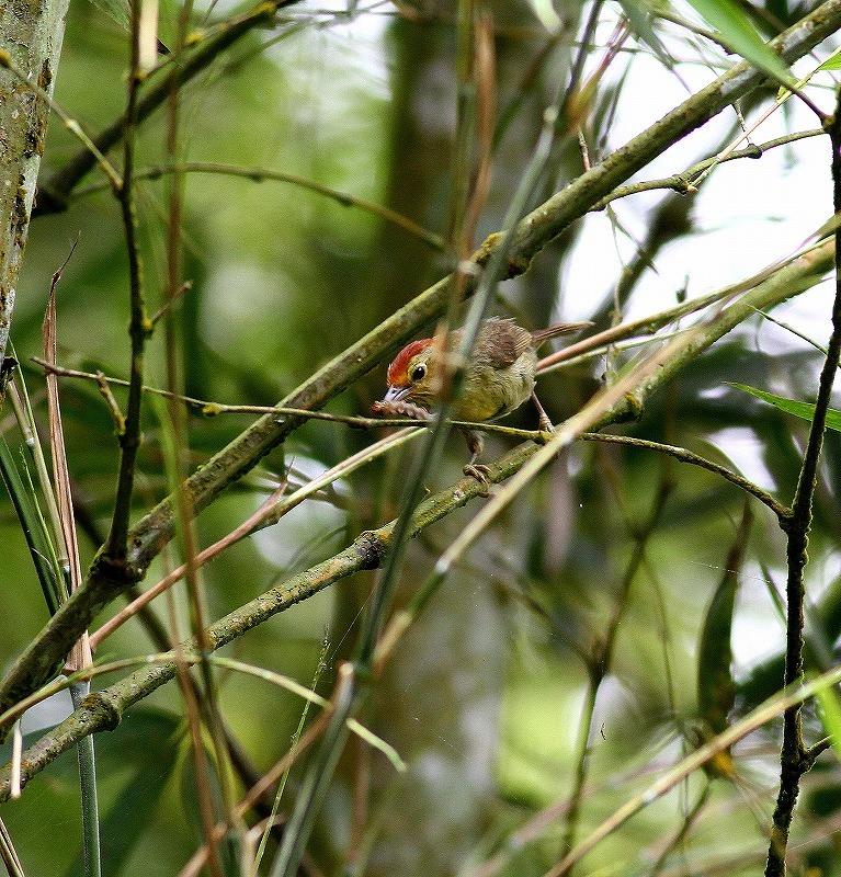 台湾鳥見旅行(その5)・・・_c0213607_19522713.jpg