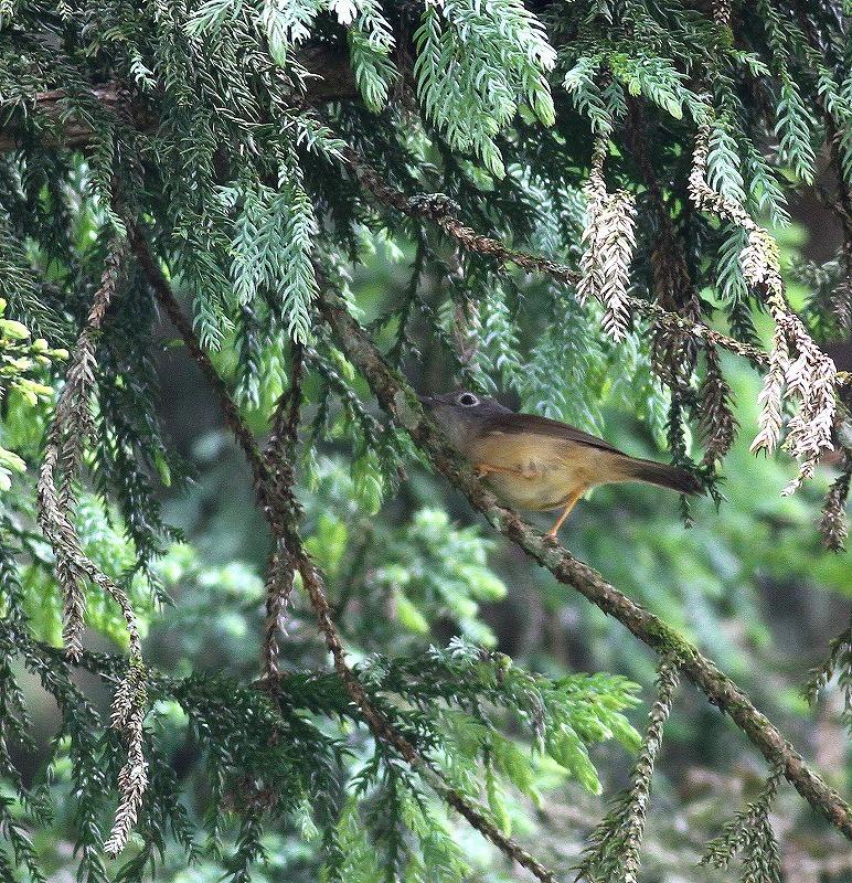 台湾鳥見旅行(その5)・・・_c0213607_19531968.jpg