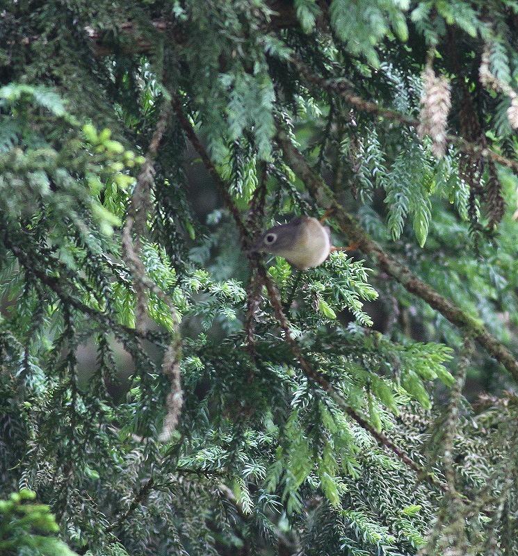 台湾鳥見旅行(その5)・・・_c0213607_19532380.jpg