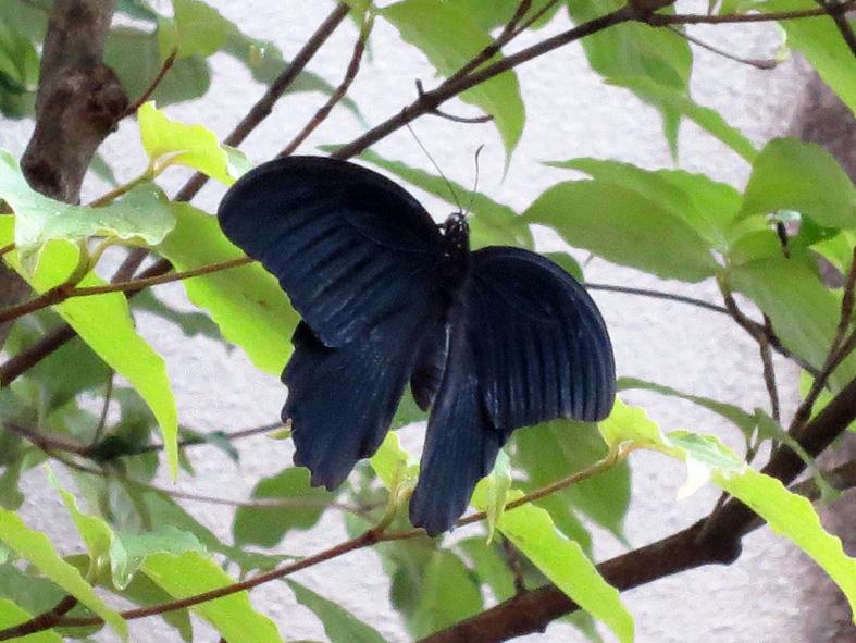 ■虫の声、鳥の声、蝉の声──週替わりの夕暮れ[6/25-26]_d0190217_22285347.jpg