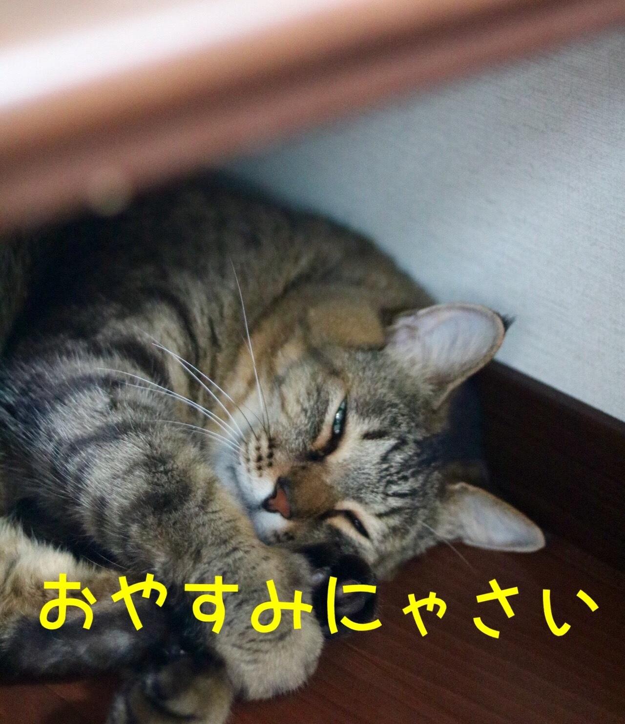 にゃんこ劇場「いってらっしゃいとおやすみにゃさい」_c0366722_06034316.jpeg