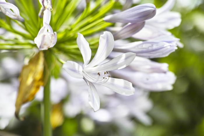 初夏のお花をDP3で味わう_c0223825_01112153.jpg
