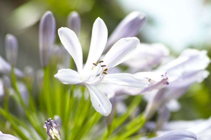 初夏のお花をDP3で味わう_c0223825_01202046.jpg