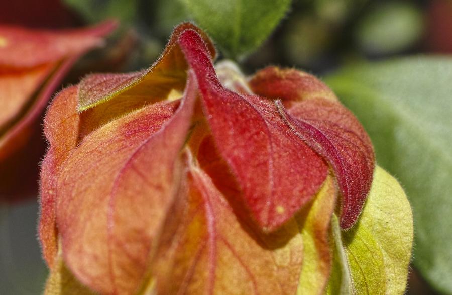 初夏のお花をDP3で味わう_c0223825_01331732.jpg