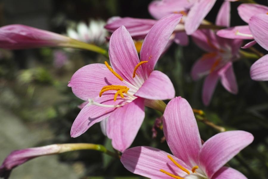 初夏のお花をDP3で味わう_c0223825_01435243.jpg