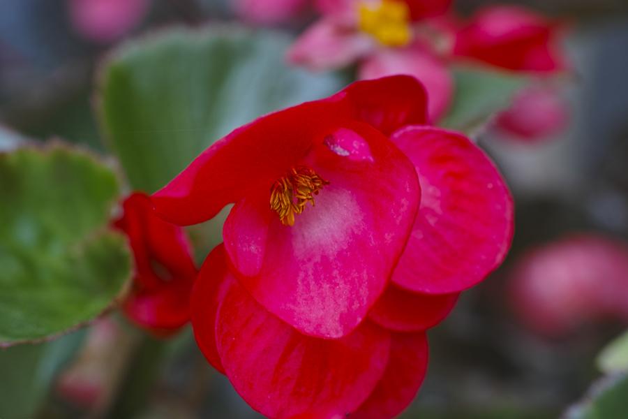 初夏のお花をDP3で味わう_c0223825_02430371.jpg