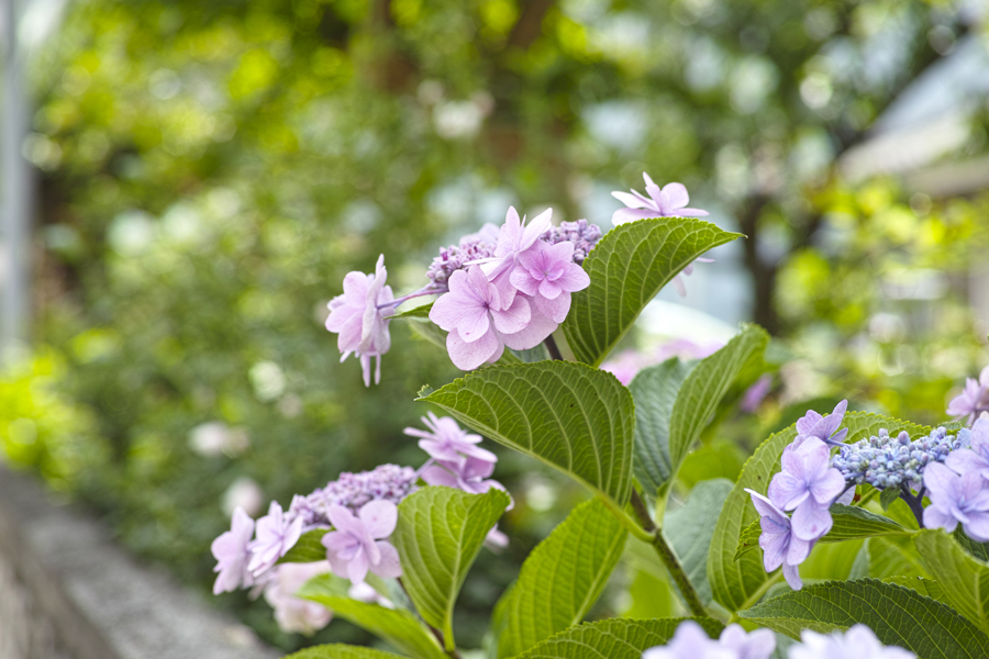 初夏のお花をDP3で味わう_c0223825_02515711.jpg