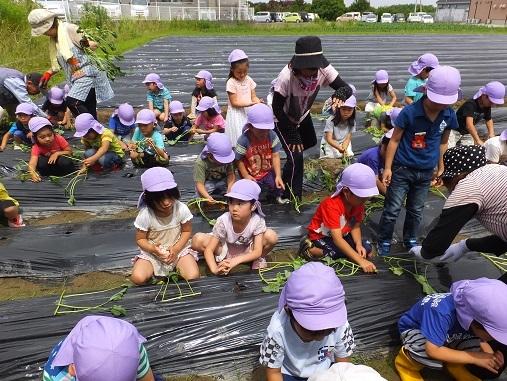 サツマイモのプレゼント大作戦2016 明日天気にな~れ!_e0272869_22595581.jpg
