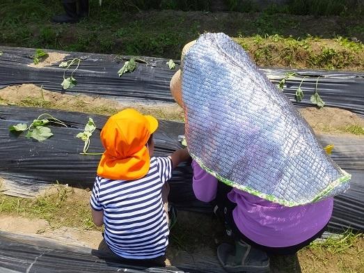 サツマイモのプレゼント大作戦2016 明日天気にな~れ!_e0272869_23040411.jpg