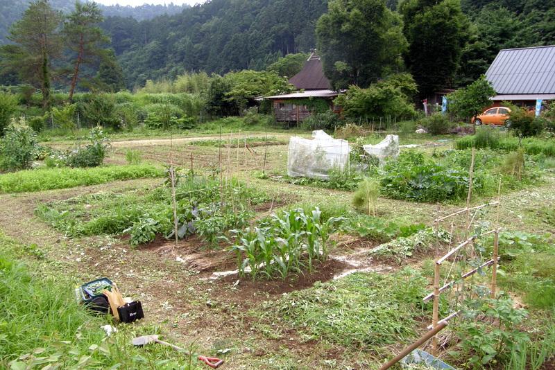 草刈り&支柱増設_c0057390_3322456.jpg