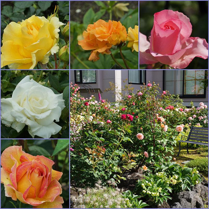 薔薇の庭_d0162994_15161579.jpg