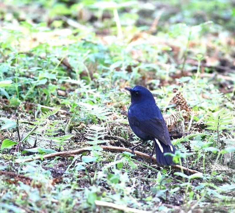 台湾鳥見旅行(その6)・・・_c0213607_17375823.jpg