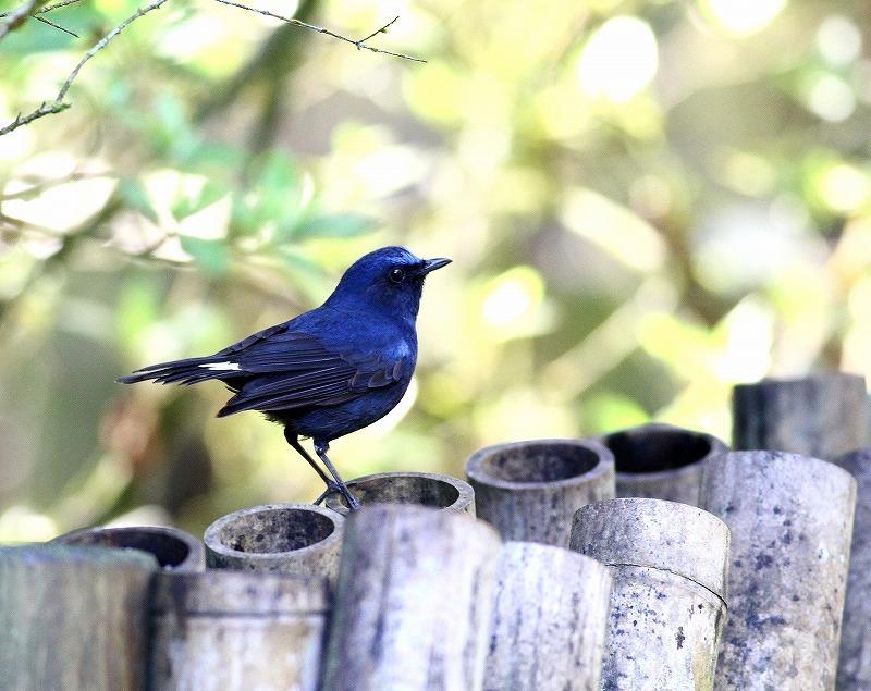 台湾鳥見旅行(その6)・・・_c0213607_17380302.jpg