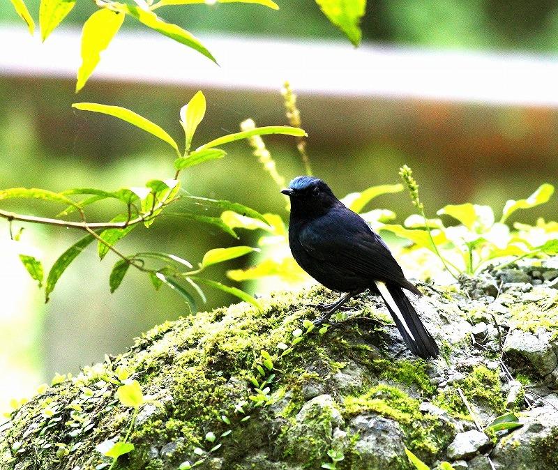 台湾鳥見旅行(その6)・・・_c0213607_17380775.jpg