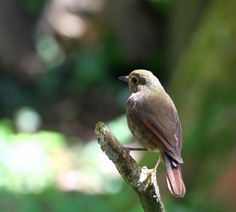 台湾鳥見旅行(その6)・・・_c0213607_17381982.jpg