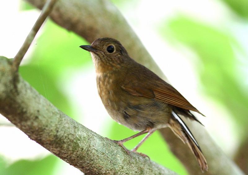 台湾鳥見旅行(その6)・・・_c0213607_17384276.jpg
