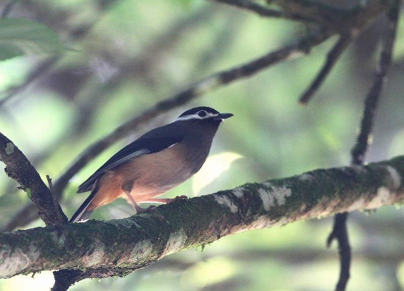 台湾鳥見旅行(その6)・・・_c0213607_17392536.jpg