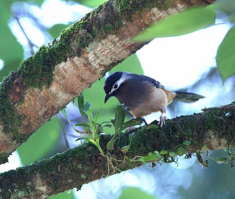 台湾鳥見旅行(その6)・・・_c0213607_17392964.jpg