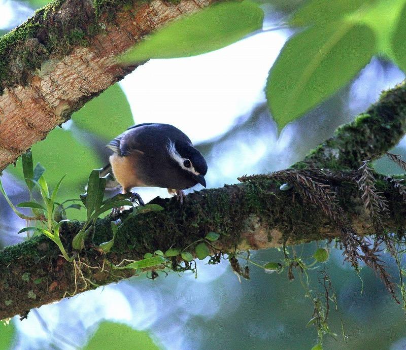 台湾鳥見旅行(その6)・・・_c0213607_17393367.jpg