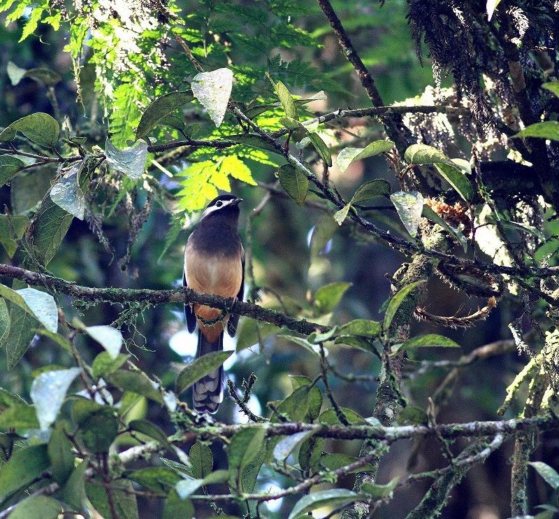 台湾鳥見旅行(その6)・・・_c0213607_17393777.jpg