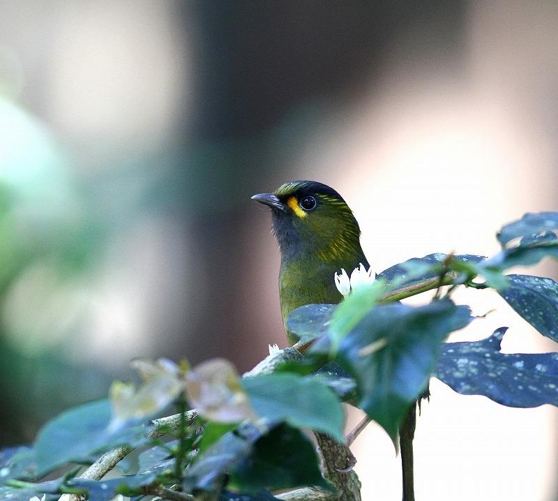 台湾鳥見旅行(その6)・・・_c0213607_18021651.jpg