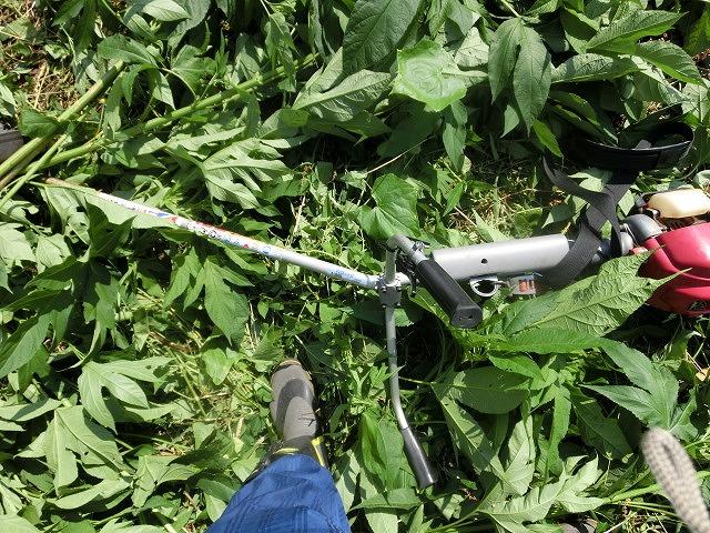 5年間愛用した草刈り機が金属疲労でオシャカに  「小潤井川友の会」の草刈り清掃_f0141310_6502718.jpg