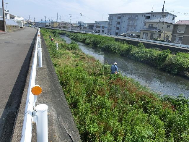 5年間愛用した草刈り機が金属疲労でオシャカに  「小潤井川友の会」の草刈り清掃_f0141310_6512217.jpg