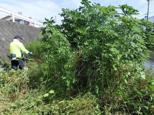 5年間愛用した草刈り機が金属疲労でオシャカに  「小潤井川友の会」の草刈り清掃_f0141310_6514942.jpg