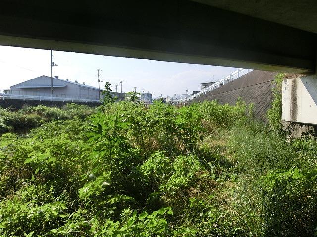 5年間愛用した草刈り機が金属疲労でオシャカに  「小潤井川友の会」の草刈り清掃_f0141310_65284.jpg