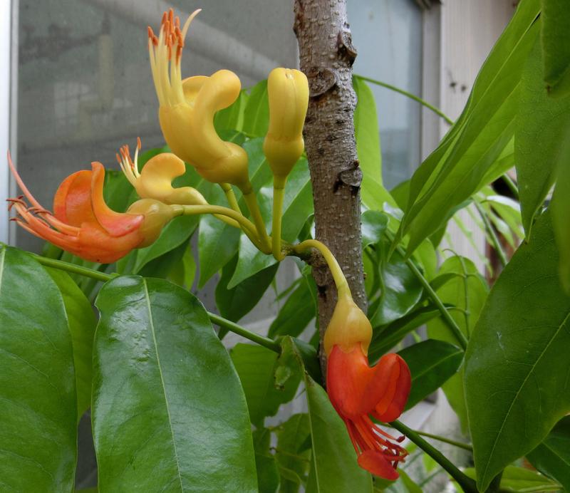 6月29日(水)家庭菜園が豊作_d0278912_22502667.jpg