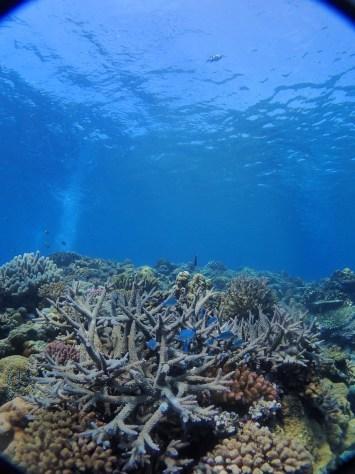 6月29日またまた水納島へGO~_c0070933_22165426.jpg