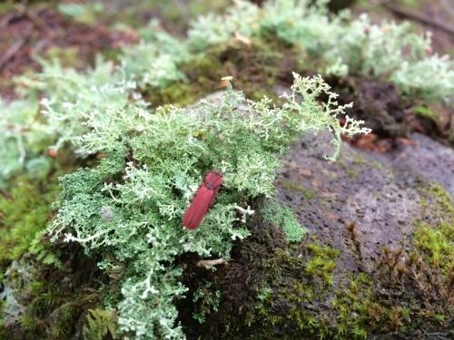 植物とか植物とか植物とか。_c0369344_11282647.jpeg