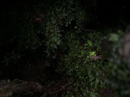 植物とか植物とか植物とか。_c0369344_11285769.jpeg