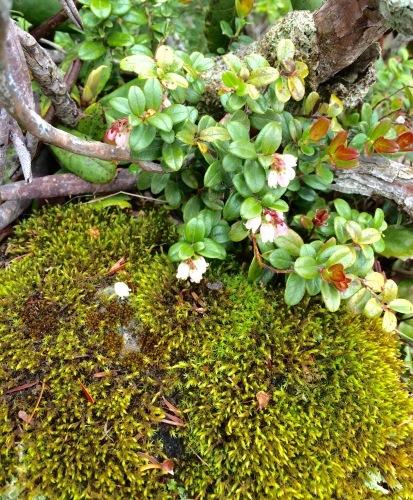 植物とか植物とか植物とか。_c0369344_11413592.jpeg