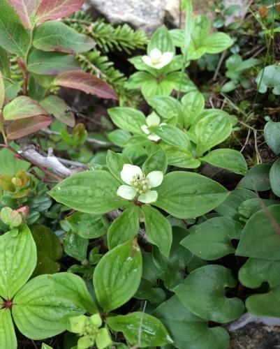 植物とか植物とか植物とか。_c0369344_11452319.jpeg